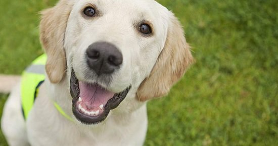 Bactérie : La salive des chiens et chats est potentiellement dangereuse pour l'homme