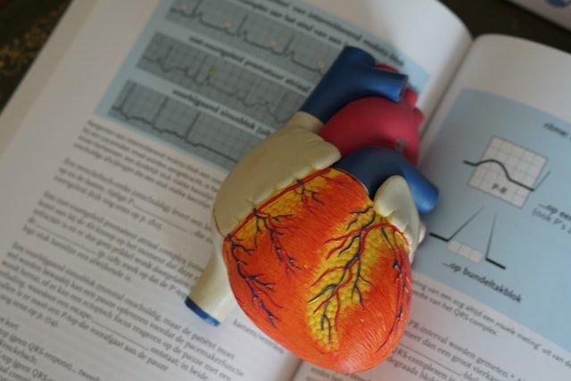 Maladies cardiovasculaires : les risques sont moins élevés grâce au sport