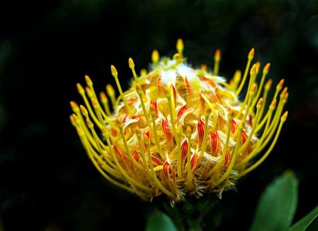 Une fleur remplie de pollens.
